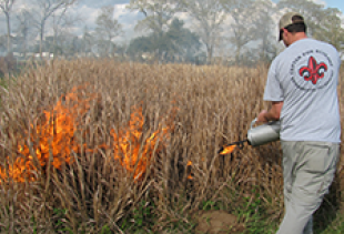 Annual prairie burn
