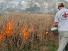 Annual prairie burn